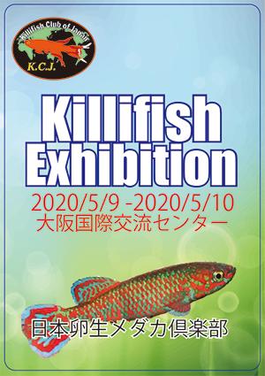 killifish2.jpg